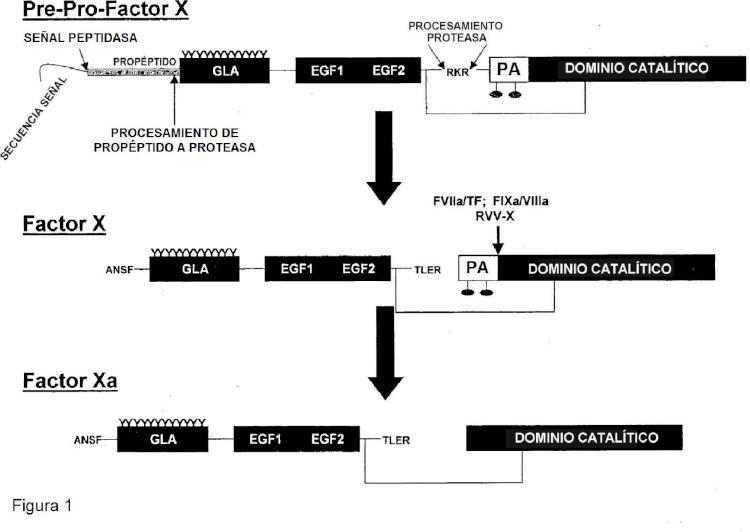Composiciones y métodos para modular la hemostasia.