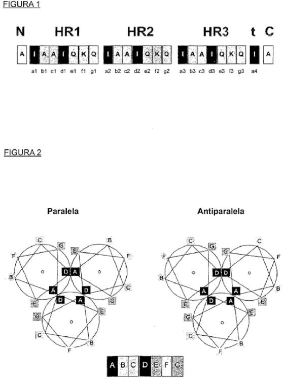 Proteínas de superhélice antiparalela de una sola cadena.
