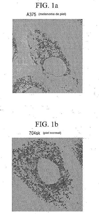 Compuestos de éter de fosfolípido fluorescentes, composiciones y procedimientos de uso.