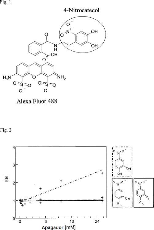 Procedimiento para la identificación de moduladores de catecol O-metiltransferasa.