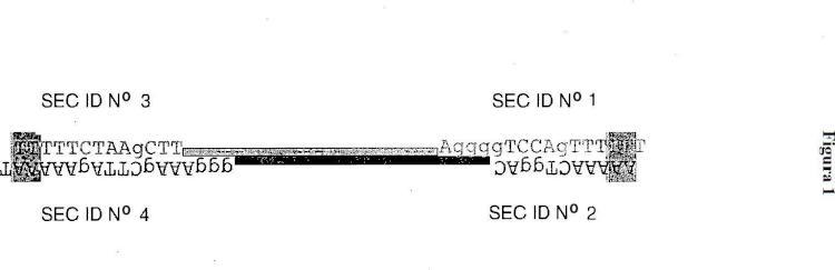 Construcción de expresión de ADN.