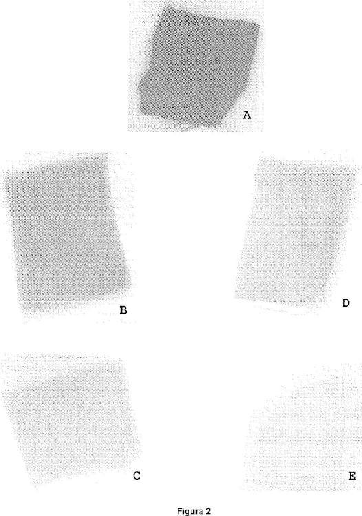 Procedimiento de preparación de tejidos biológicos para prótesis biológicas.