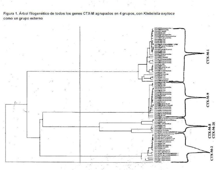 Métodos para la detección e identificación de beta lactamasas de espectro extendido.