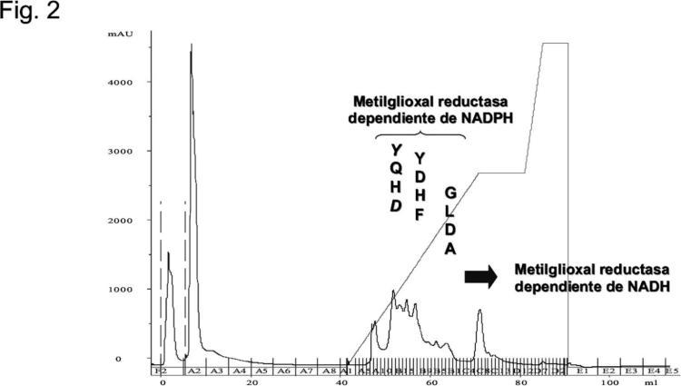 Microorganismos y procedimientos para la producción de 1,2-propanodiol y acetol.
