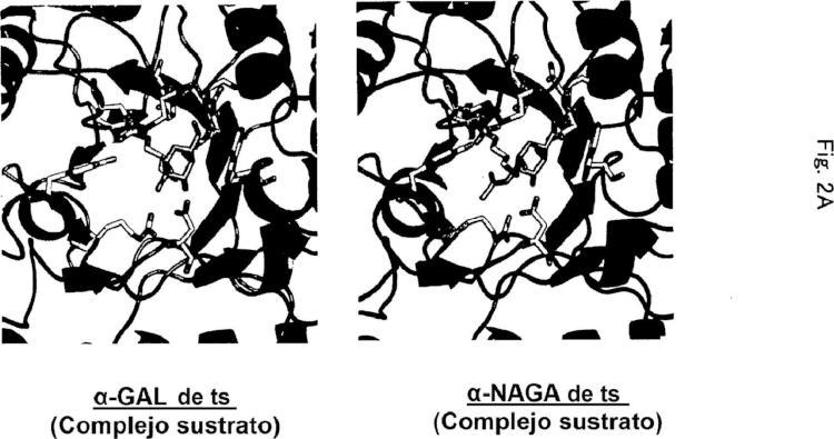 Composición farmacéutica para terapia de reemplazo enzimático.