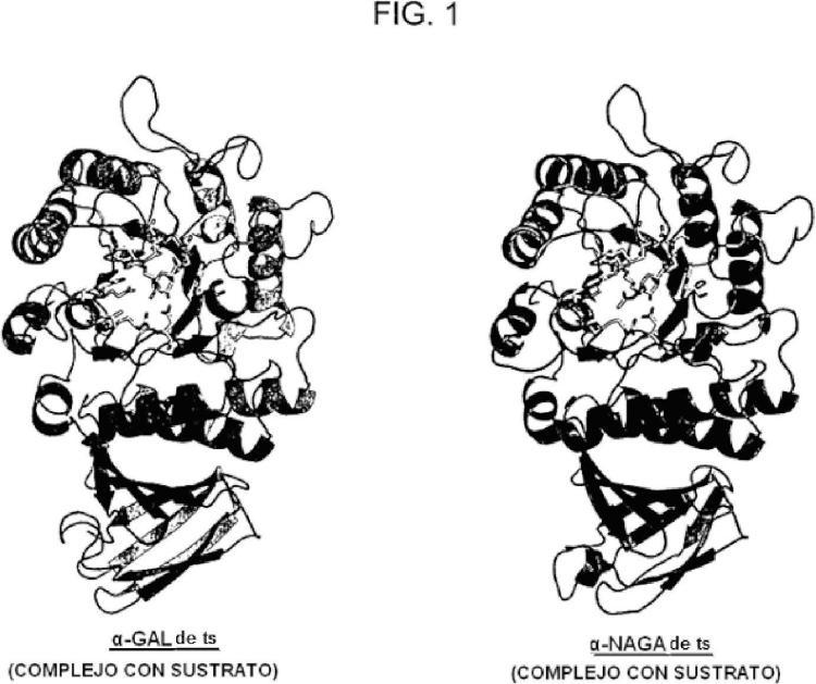 Nueva enzima altamente funcional que tiene especificidad de sustrato modificada.