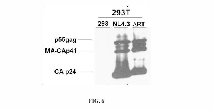 Partículas víricas VSV-VIH que carecen de la funcionalidad transcriptasa inversa y aplicaciones terapéuticas de las mismas.