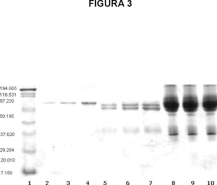 Inmunoterapéuticos polivalentes de alta especificidad basados en anticuerpos modificados y formulación liofilizada inyectable altamente segura y eficaz.