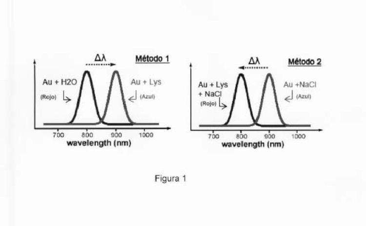 Procedimiento para la detección colorimétrica de lisozima en orina por nanopartículas agregadas de oro.