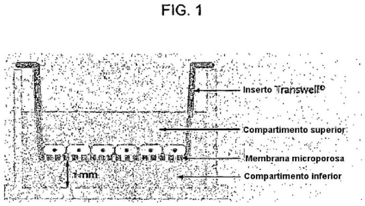 Uso de una composición que contiene células madre mesenquimatosas derivadas de sangre de cordón umbilical humano para inducir diferenciación y proliferación de células precursoras neurales o células madre neurales a células neurales.