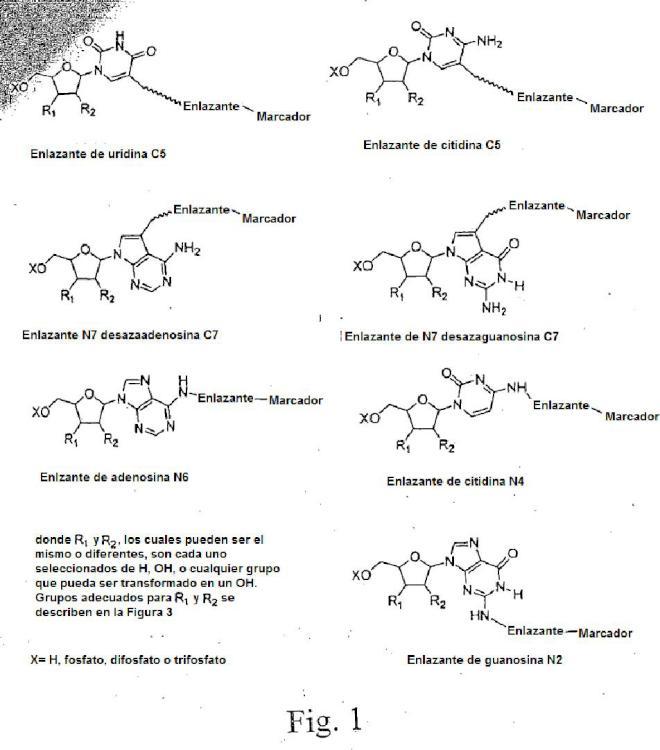 Nucleótidos modificados para secuenciación de polinucleótidos.