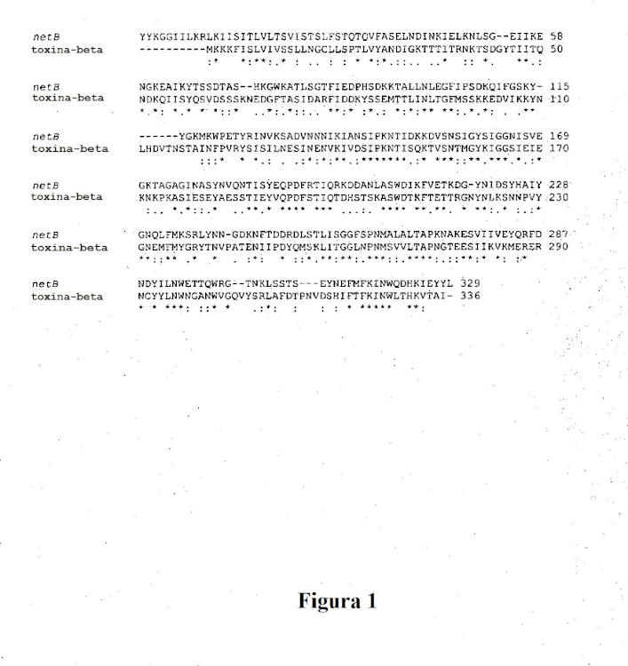 Toxina clostridial NetB.