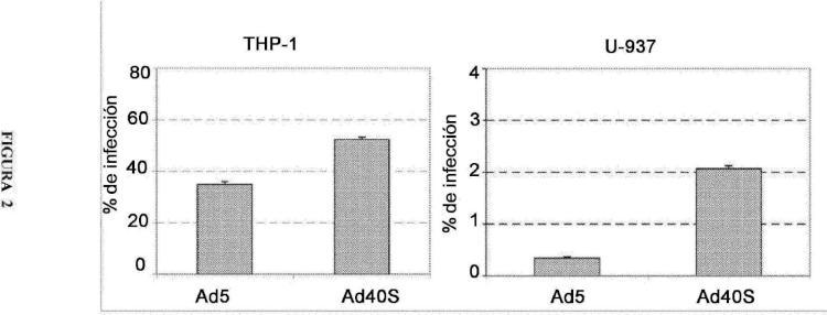 Métodos y reactivos para una transferencia génica eficaz y dirigida a células del linaje de monocitos macrófagos.