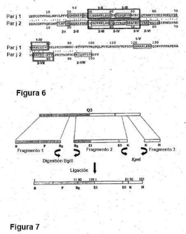 Ilustración 4 de la Galería de ilustraciones de Proteínas quiméricas hipoalergénicas pertenecientes a la familia de transferencia de lípidos de Parietaria judaica para usar en el tratamiento de alergias