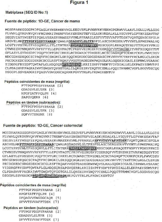 Proteína matriptasa y usos de la misma.