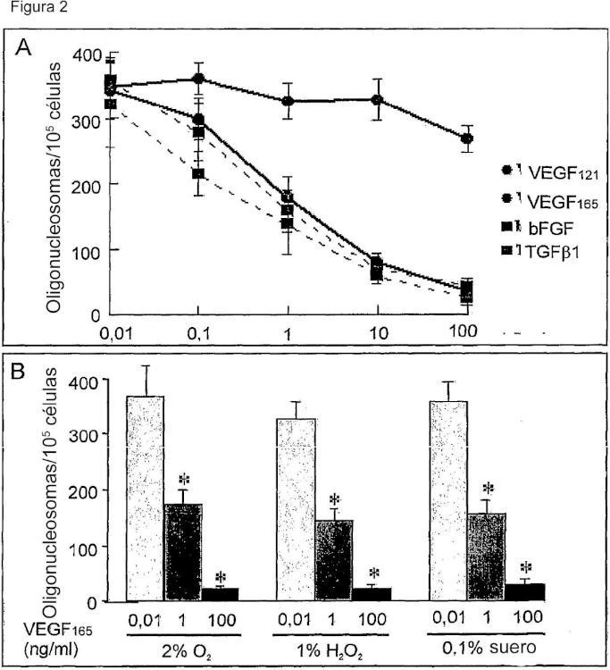 Uso de VEGF y homólogos para tratar trastornos neurológicos.