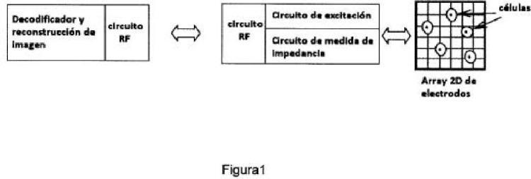 Sistema de medida de bioimpedancia para la monitorización en tiempo real e inalámbrica de cultivos celulares basado en circuitos CMOS y modelado eléctrico.