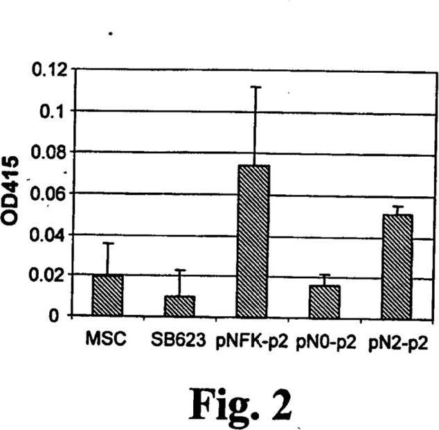 Métodos y composiciones para modular la diferenciación de células pluripotenciales.