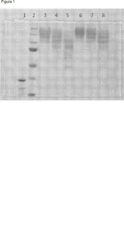 Modificación de agentes de entrecruzamiento enzimáticos para controlar las propiedades de las matrices entrecruzadas.