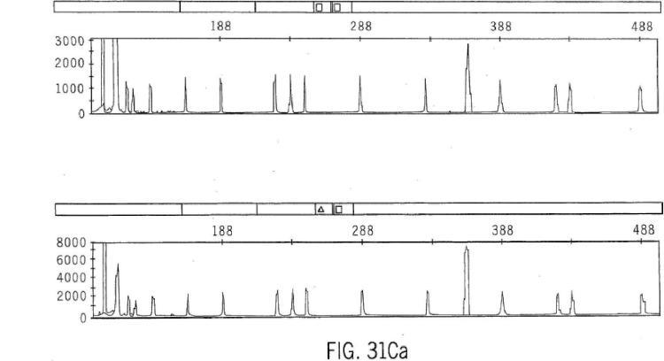 Alargamiento Iterado Programable: Un método para elaborar genes sintéticos y ADN combinatorio y librerías de proteína.