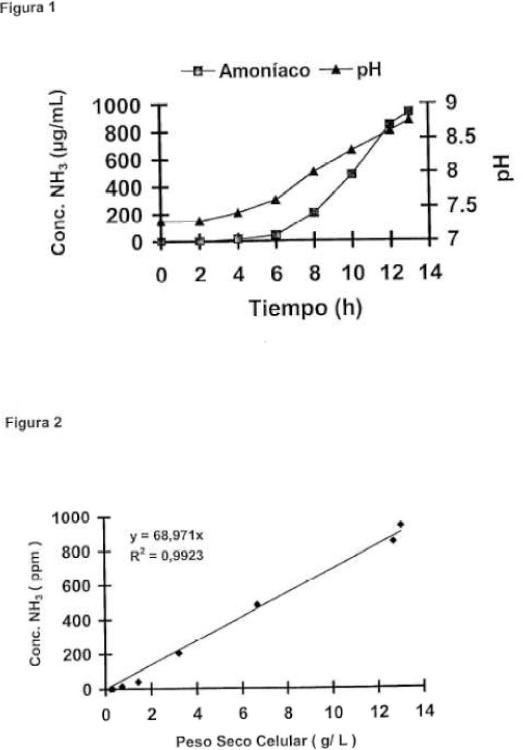 Composición biofertilizante.