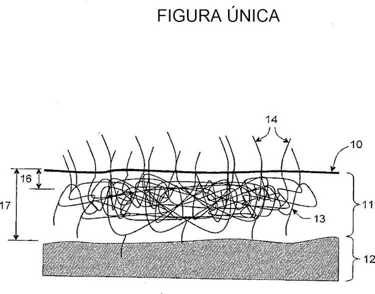 Procedimiento de cultivo y de recolección de Zoysia tenuifolia y productos obtenidos.