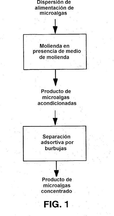 Procedimiento para acondicionamiento y concentración de microalgas.