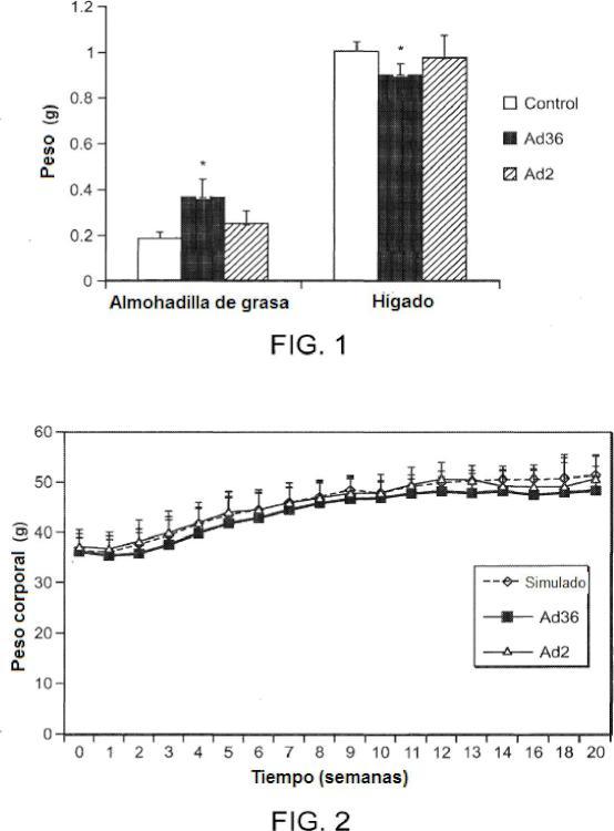 Proteína E4orf1 de adenovirus Ad36 para prevención y tratamiento de enfermedad de hígado graso no alcohólico.