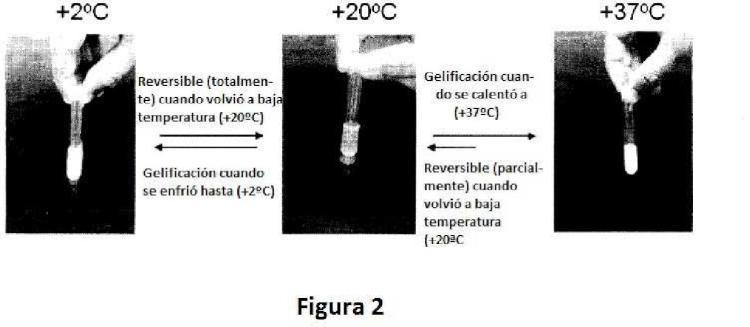 Composiciones de sales de quitosano/glucosamina termogelificantes, duales y altamente biocompatibles.