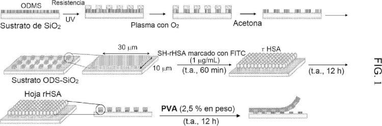 Estructura polimérica similar a una película delgada y método para preparar la misma.
