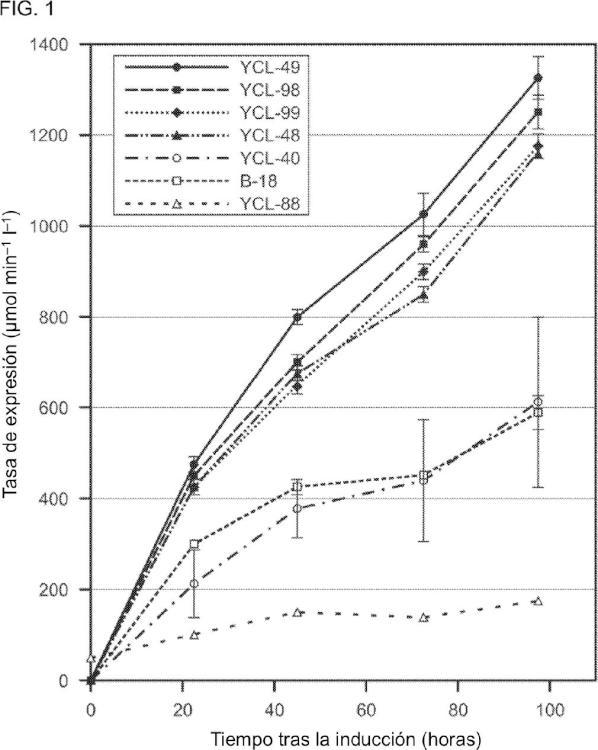 Composiciones y métodos para producir enterocinasa en la levadura.