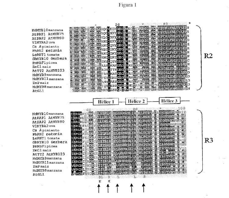 Composiciones y métodos para modular la producción de pigmentos en plantas.