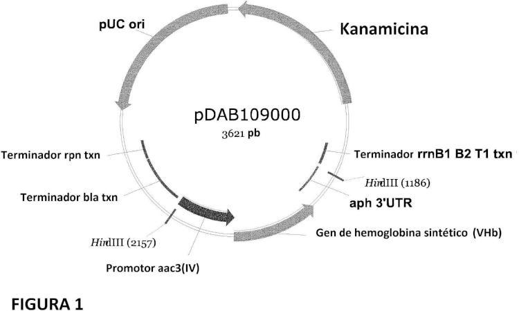 Mejora de la producción de espinosinas con proteínas que se unen al oxígeno.