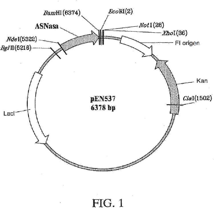 Huésped recombinante para la producción de L-asparaginasa II.