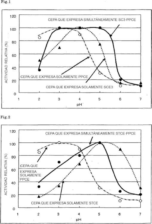 Preparación de celulasa que contiene endoglucanasas derivadas de dos tipos diferentes de microorganismos.