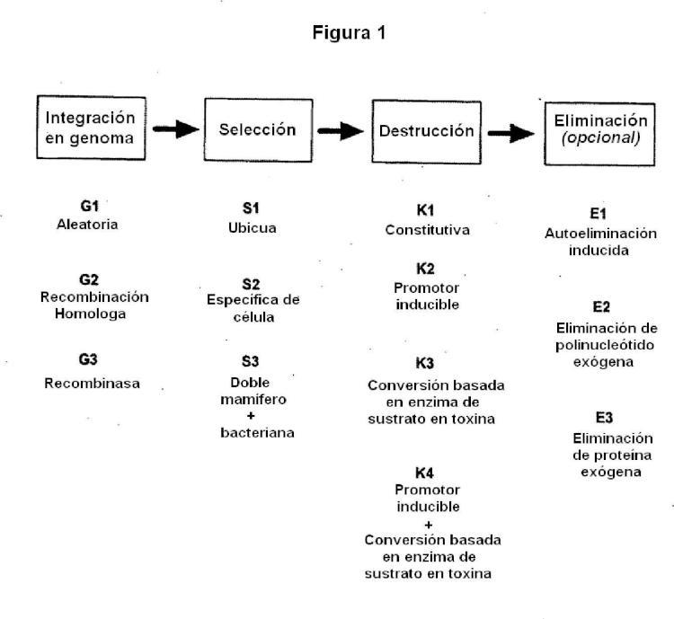 Métodos y composiciones para el tratamiento de enfermedades.