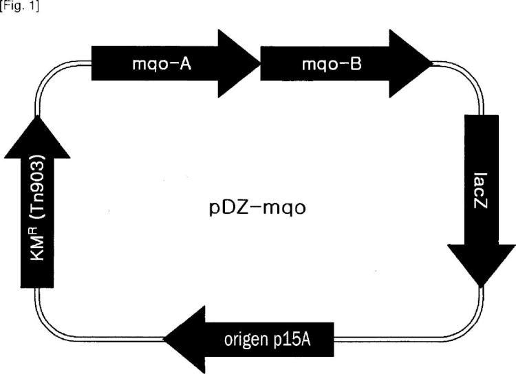 Cepa de corinebacteria que tiene mejorada la productividad de 5¿-xantosina monofosfato y procedimiento de producción de 5¿-xantosina monofosfato usando la misma.