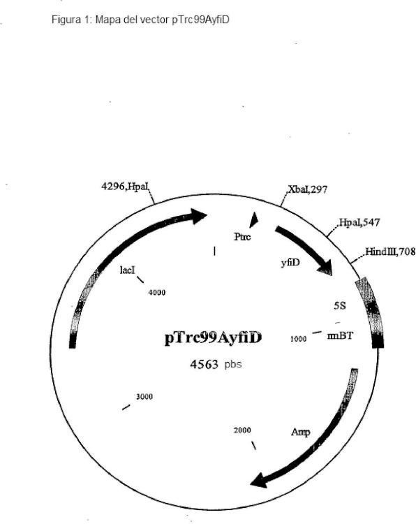 Procedimiento para la producción de L-treonina, utilizando cepas de la familia Enterobacteriaceae que contienen un marco de lectura abierto yfiD y/o un gen pflB intensificado.