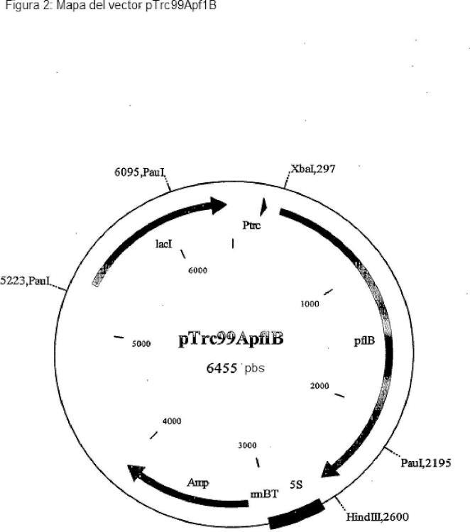 Procedimiento para la producción de L-treonina, utilizando…