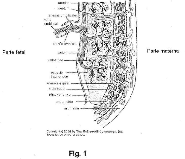 Células adherentes de la placenta y uso de las mismas en el tratamiento de enfermedad.
