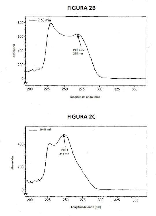 Ilustración 2 de la Galería de ilustraciones de Ácidos ribonucleicos de doble cadena con estructura fisicoquímica robusta y actividad biológica muy específica