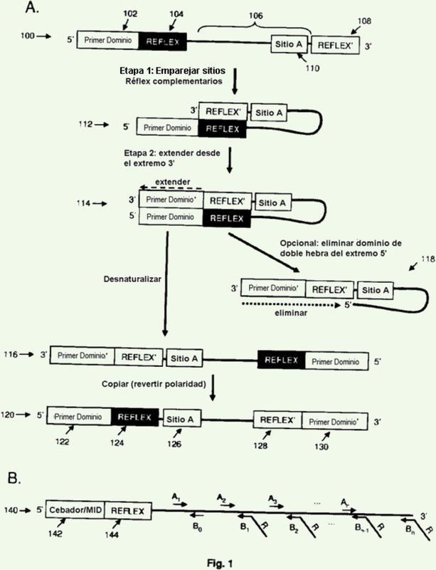 Composiciones y métodos para el reordenamiento de ácido nucleico molecular.