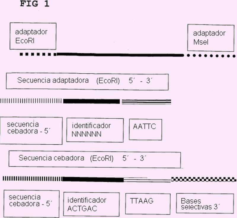 Detección de alto rendimiento de marcadores moleculares basada en fragmentos de restricción.