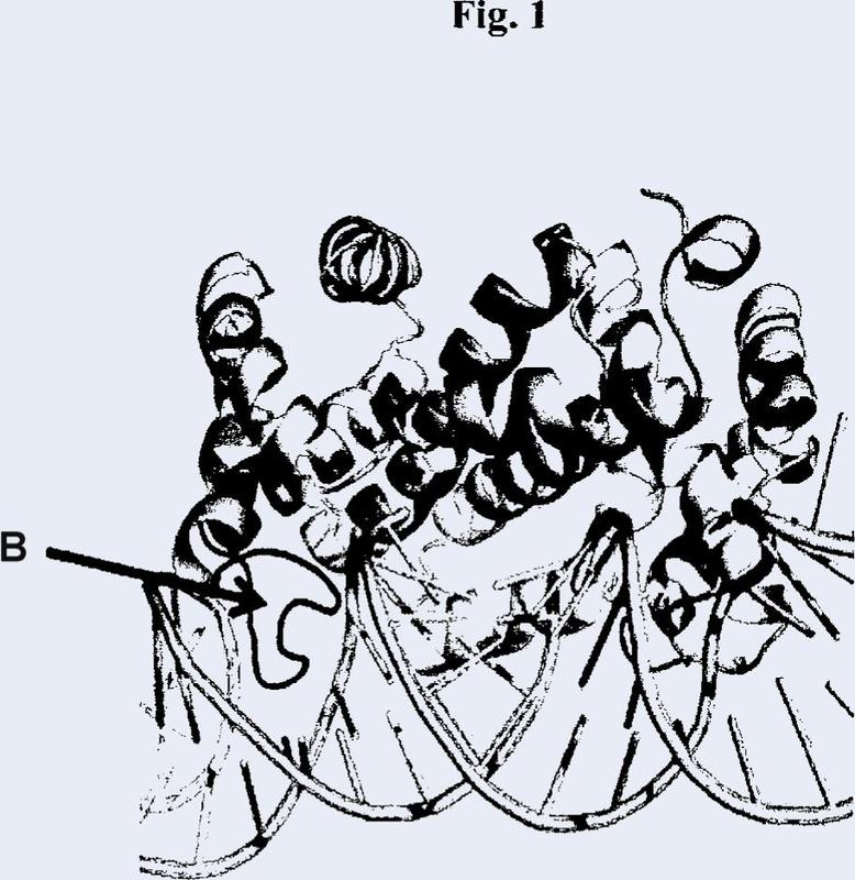 Endorribonucleasas de ARNbc.