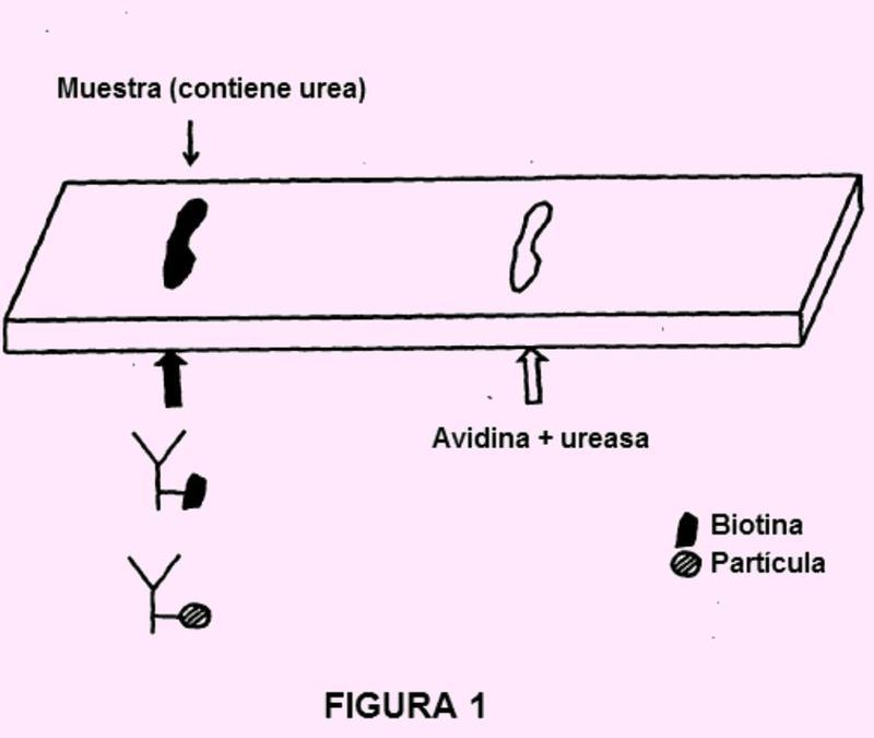 Aparato y método para el flujo lateral de ensayos de afinidad.