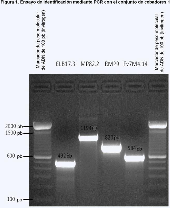 Bacteriófagos contra salmonella ssp y su uso.