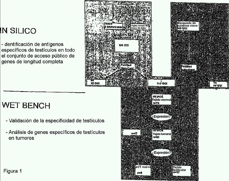 Productos génicos expresados de manera diferencial en tumores y utilización de los mismos.
