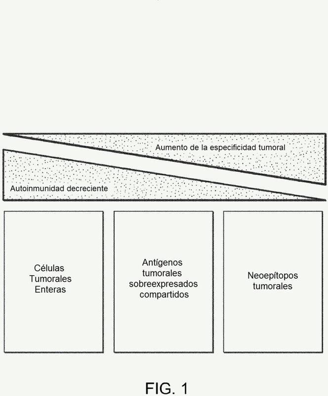 Composiciones y métodos para identificar neoantígenos específicos de un tumor.