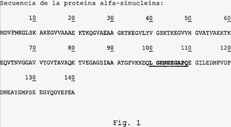 Utilización de mimotopos de epítopos de alfa-sinucleína para el tratamiento de enfermedades de cuerpos de Lewy.