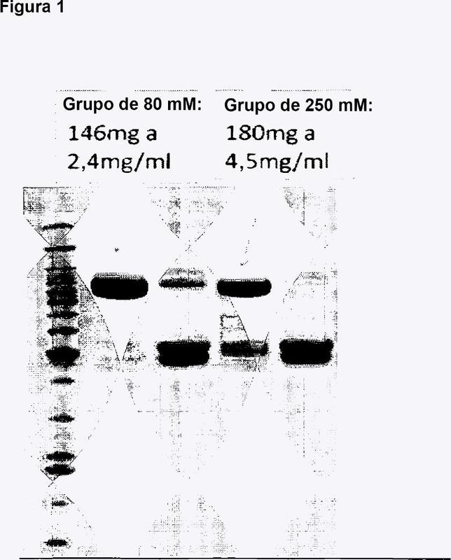 Proteínas de fusión terapéuticas.